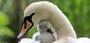 Společně na cestě mateřstvím